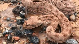 Man rescues snake from the brink of death