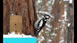 A woodpecker hides food