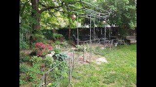 Building our Shade Garden Torii Gateway