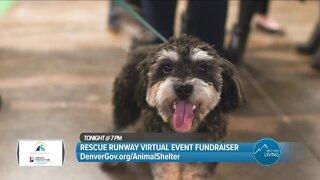 Rescue An Animal Or Donate! // DenverGov.org/AnimalShelter