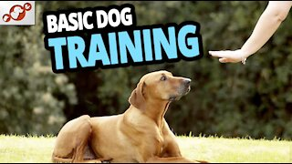 TOP 10 Essential Commands Every Dog Should Know! - Dog Training
