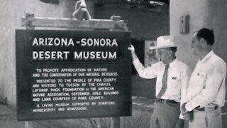 Desert Museum is Tucson's top attraction and Absolutely Arizona