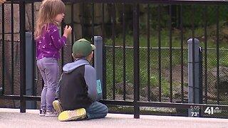 Kansas City Zoo reopens