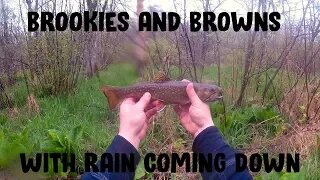 Brookies & Browns With Rain Coming Down