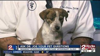 Ask Dr. Joe your pet questions