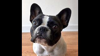 Puppy dog compilation