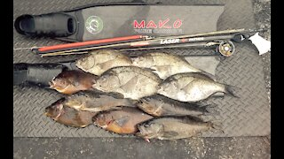 Spearfishing Perch in Gorgeous Conditions - Monterey - Carmel