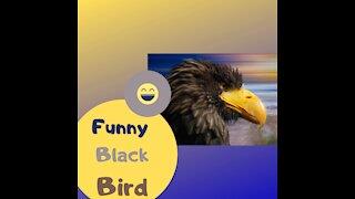 Funny Black Bird in nature