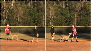 Hjorten blir med å spiller baseball
