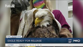 Bald Eagle expected to be released