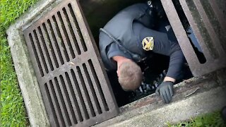Police Officer in Florida rescues ducklings from storm drain