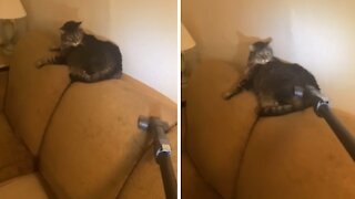 Weirdo cat loves to get brushed by vacuum cleaner