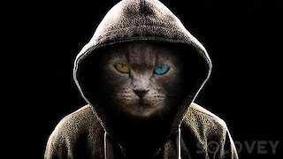 Russian kitty