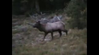 Elk Hunting With Don and Bryan