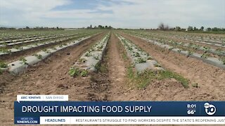 Drought impacting food supply