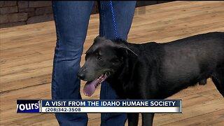 Idaho Humane Society: Ace!