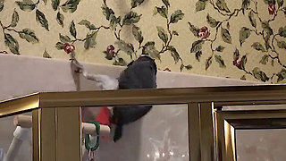 Talking parrot has superhero style of movement