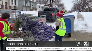 Recycle live Christmas trees through Scouting for Trees program