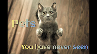 Pets you have never seen