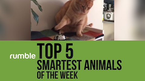 Rumble Virals presents the top 5 smartest animals of the week!
