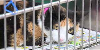 The Animal Foundation waiving adoption fees for adult cats and dogs