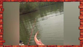 Cute, WIn, or Fail? | Funny Fishing