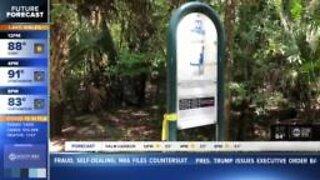 Walking Club: Exploring Alderman's Ford Conservation Park