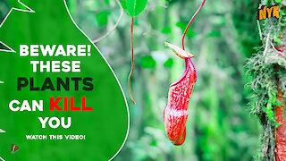 5 Most Deadliest Plants around the World