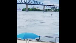 Humpback Whale spotted swimming in the St. Laurent River in Montreal