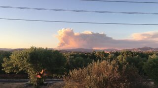 Hummingbird photobombs video of California wildfire