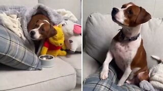 Dog gets emotional while watching 'Marley and Me'