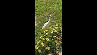 amazing bird in the garden