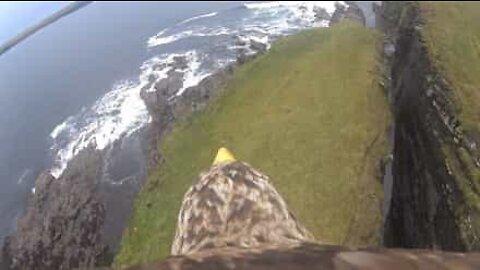 A visão de uma águia sobre as falésias da Escócia