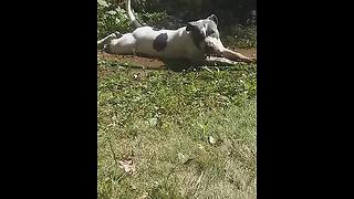 Dog takes mud bath, then jumps on owner