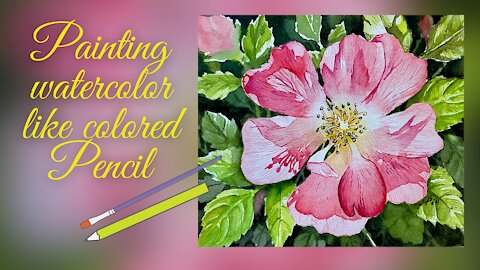 Wild Rose Flower In Watercolor Painting With A Colored Pencil