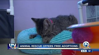 Local animal shelter offering free pet adoptions