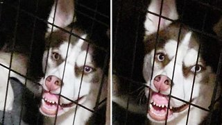 Doughnut eating dog pulls face during time out