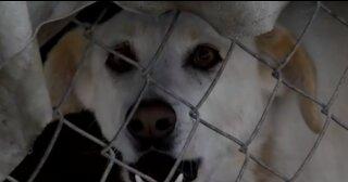 No se decidía a qué perro adoptar y compra el refugio entero para salvarlos a todos