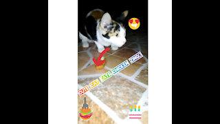 Cute Cat 😻 eats singer chicken