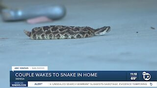 East County couple finds rattlesnake in living room