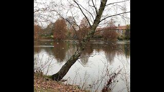 Walking through Aalborg's Most Beautiful Lake