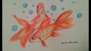 Drawing golden fish,