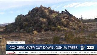 Concern over cut down Joshua trees