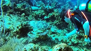 Scuba Diver Has Incredible Moment With Two Critically Endangered Sea Turtles