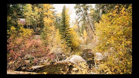 Hidden Cabin In The Woods During Autumn 4K
