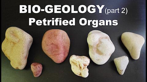 BIO-GEOLOGY 💔 PETRIFIED ORGANS with Stellium7