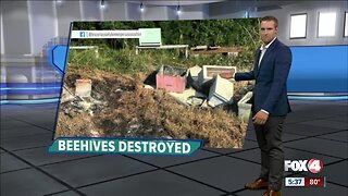 Beehive set on fire in Texas