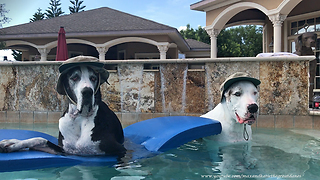 Happy Great Danes model their fishing hats