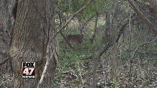Fewer people are hunting in Michigan