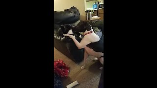 Sweet cat gives dog tongue bath